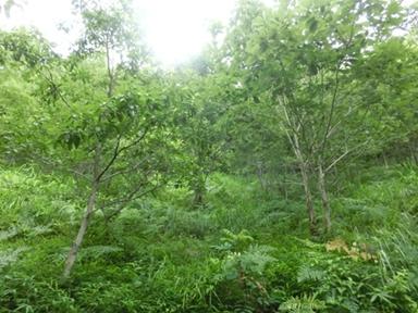 クワガタの森02