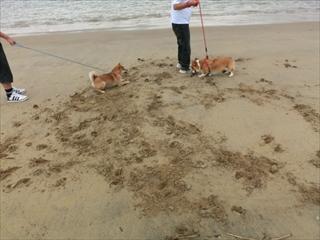 砂浜遊び_R