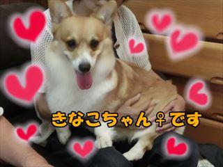 kinako1_R.jpg