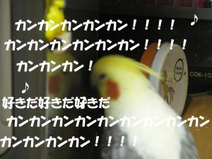 IMG_6521_convert_20131204120737のコピー