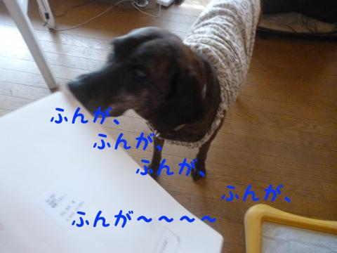 P1130992_convert_20130821183528.jpg