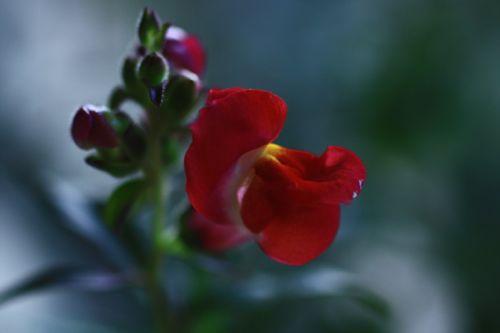 タスカンブロンズのお花