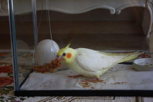 粟の穂ホルダー