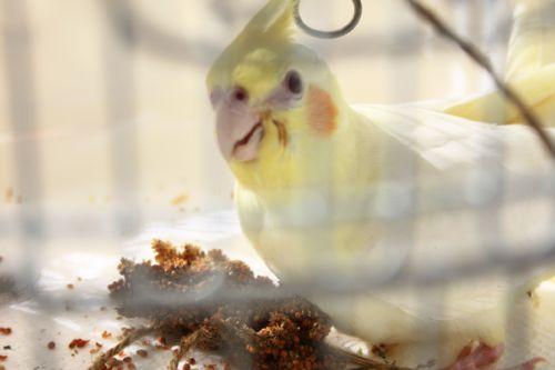 気がつけばかごの鳥