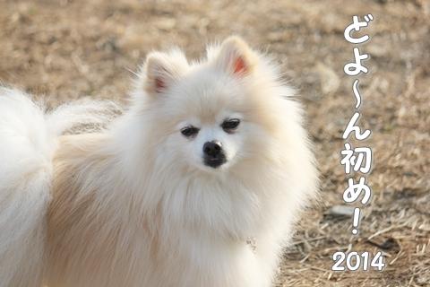 20140116-IMG_5248.jpg