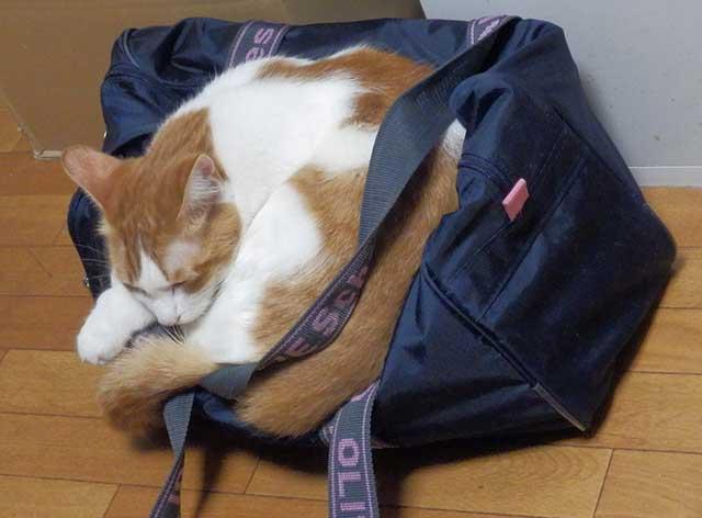 bag0.jpg