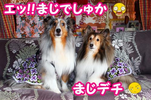 001_convert_20130601081141.jpg