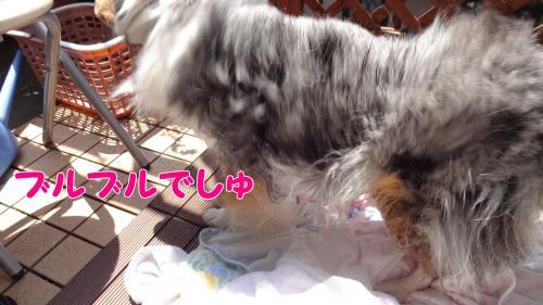 003_convert_20130504213042.jpg