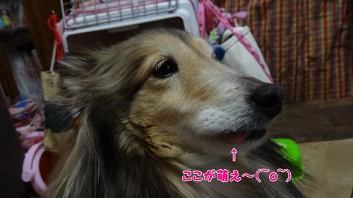 004_convert_20130423151747.jpg