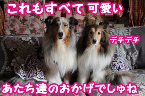 005_convert_20130601081247.jpg