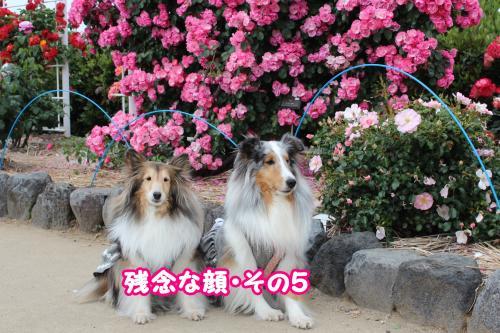 008_convert_20130520173038.jpg