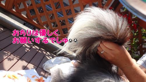 010_convert_20130504213153.jpg