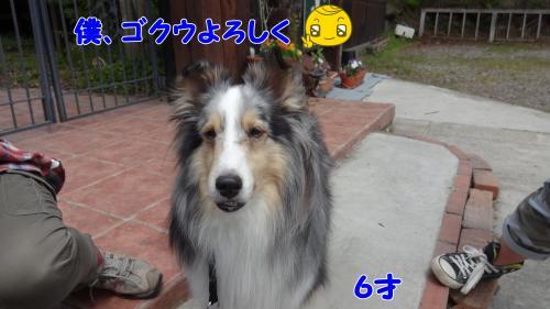 010_convert_20130505164419.jpg