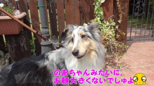 011_convert_20130505164508.jpg
