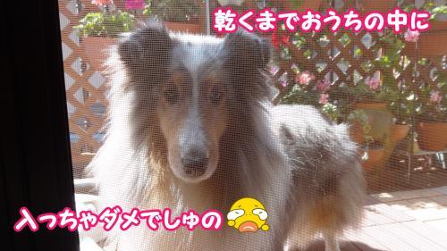 013_convert_20130525175701.jpg