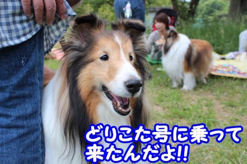 014_convert_20130529170152.jpg