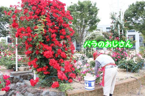 020_convert_20130520173142.jpg