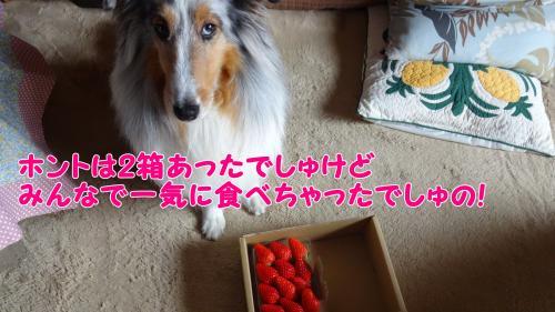 022_convert_20130425204528.jpg