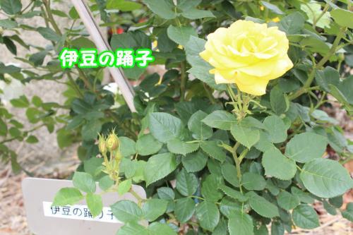 032_convert_20130520173211.jpg