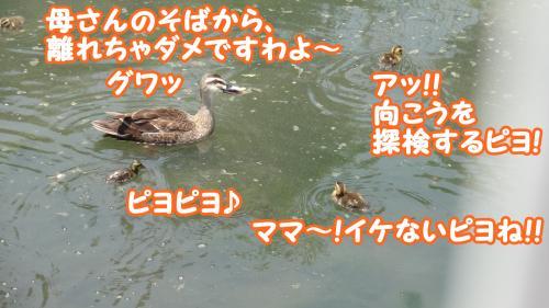 032_convert_20130525175801.jpg
