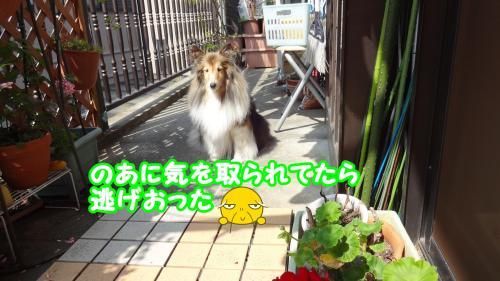 033_convert_20130522132920.jpg
