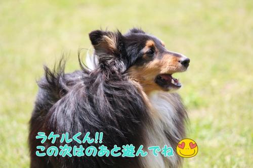 037_convert_20130505164707.jpg