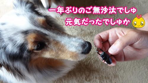 045_convert_20130522133020.jpg