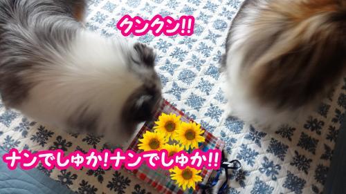 045_convert_20130809155528.jpg