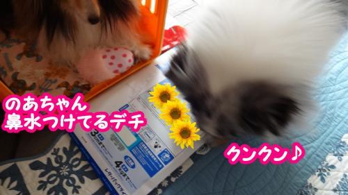 048_convert_20130807070344.jpg