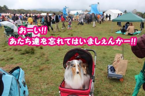 052_convert_20131101104132.jpg