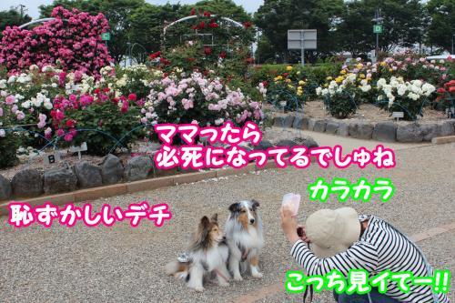 055_convert_20130520173454.jpg
