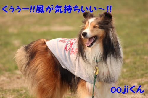 058_convert_20130415140944.jpg