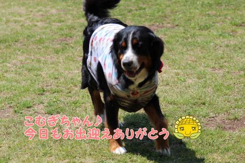 068_convert_20130505164931.jpg