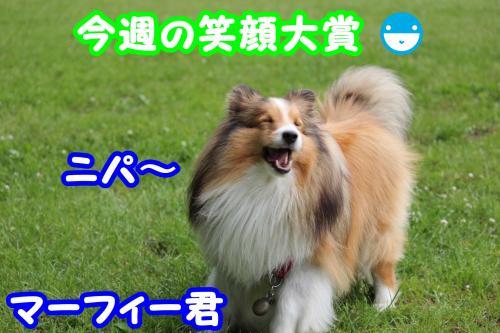 079_convert_20130612201535.jpg