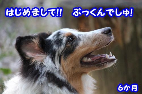 096_convert_20130813125606.jpg
