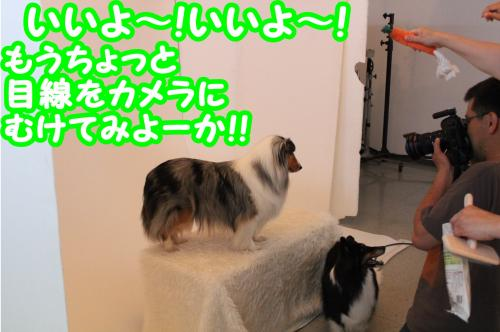 098_convert_20130606131839.jpg