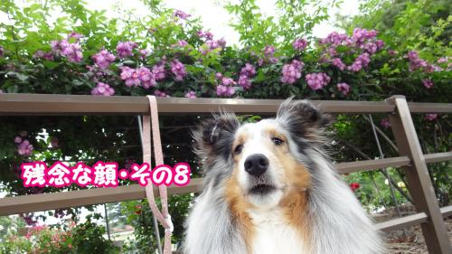 111_convert_20130520173749.jpg