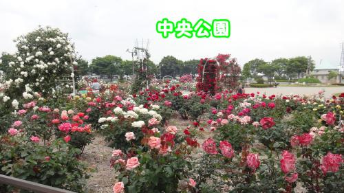115_convert_20130520173839.jpg