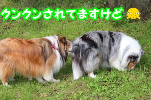 126_convert_20130612201958.jpg
