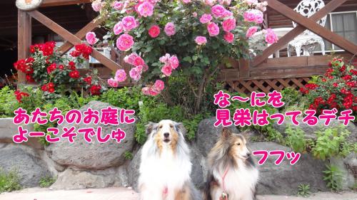 135_convert_20130517145110.jpg