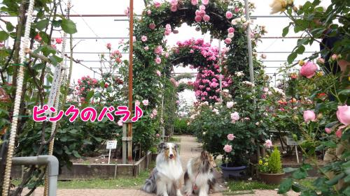 138_convert_20130517145153.jpg