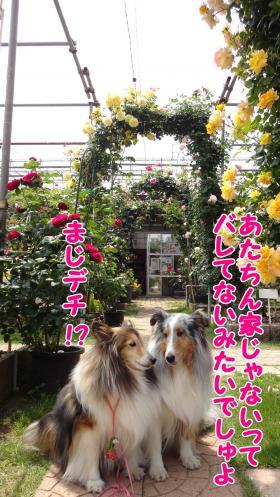 147_convert_20130517145432.jpg