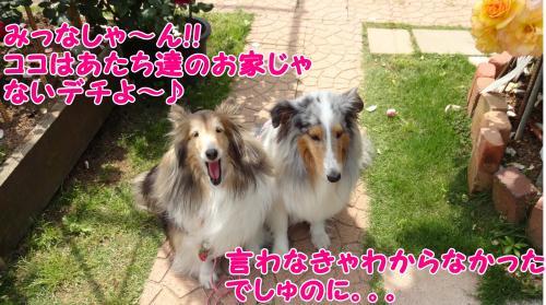 150_convert_20130517145612.jpg