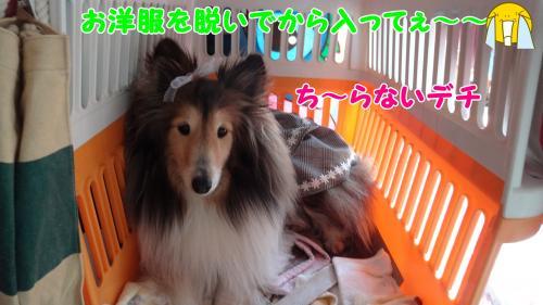 167_convert_20130514151236.jpg