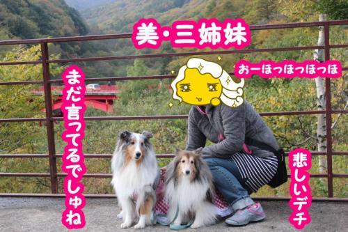 167_convert_20131101104505.jpg