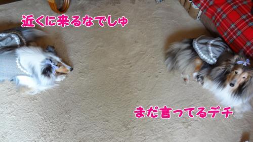 172_convert_20130514151310.jpg