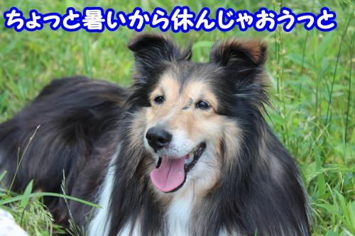 190_convert_20130529170548.jpg