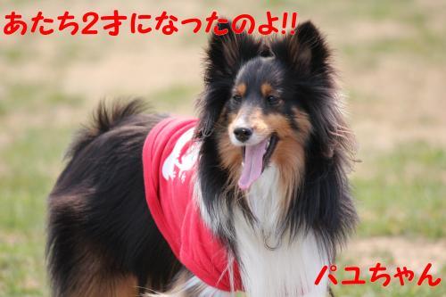 192_convert_20130415141656.jpg