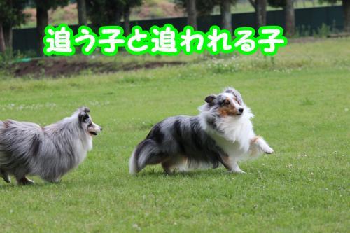 208_convert_20130612202331.jpg