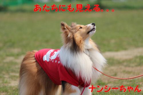 245_convert_20130415141817.jpg